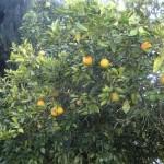 Pomarańczki!!!