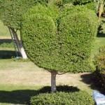 A, ot takie drzewa rosną w hotelowym ogrodzie...
