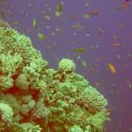 A tutaj rozpoczynają się zdjęcia podwodnych wspaniałych widoków!