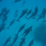 ERRATA 2!!!  Delfiny, z którymi udało mi się popływać troszeczkę. Jakie EMOCJE!!!!